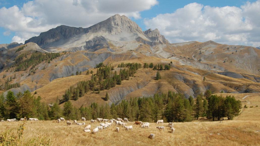 Alpages sentinelles – alpages et changement climatique